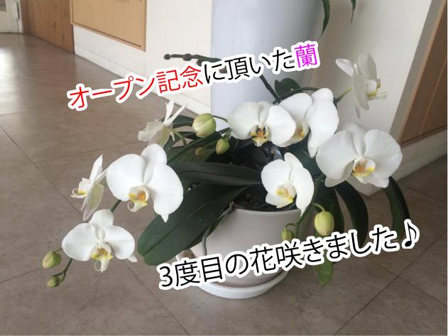 オープン記念の蘭の花おうちの買い方相談室