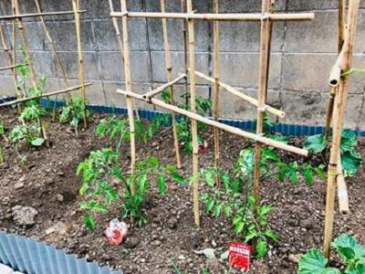 家庭菜園に挑戦🎶~我が家のマイホーム計画